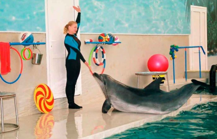 Дельфинарий, г. Кисловодска.