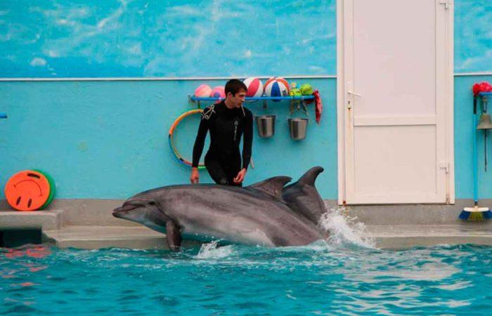Отдых с семьей в дельфинарии, г. Кисловодска.