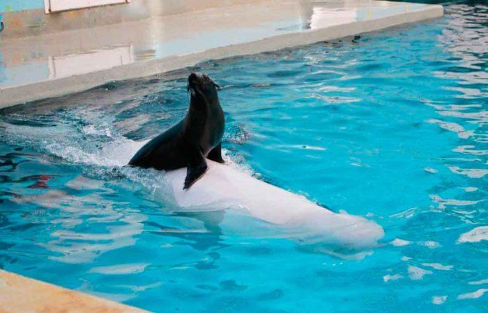 Семейный отдых в дельфинарии, г. Кисловодска.
