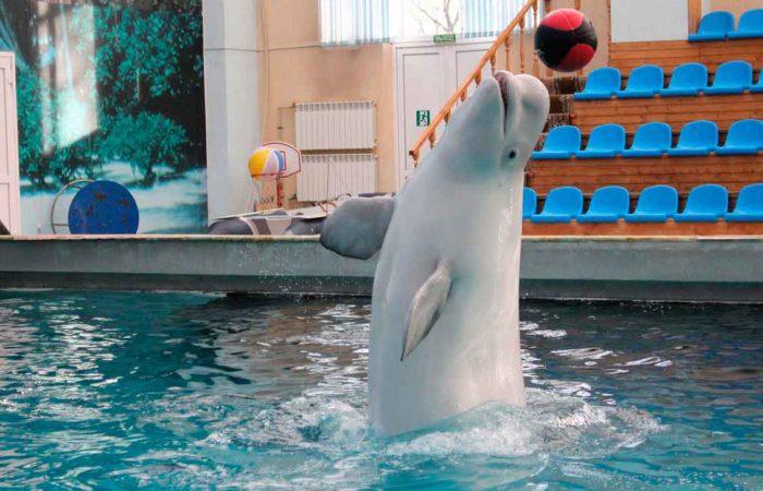 Отдых с детьми в дельфинарии, г. Кисловодска.