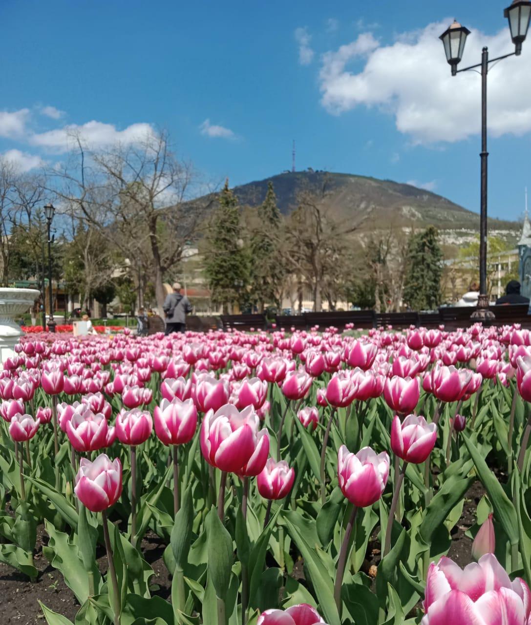 Весна на Кавказе, Пятигорск